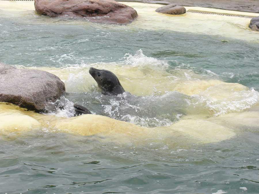 Seehundaufzuchtstation in Friedrichskoog in Dithmarschen